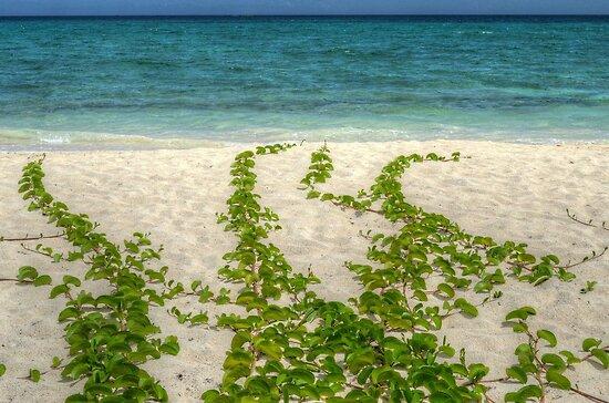 Beach in Western Nassau, The Bahamas by 242Digital