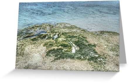 Sea Moss in Western Nassau, The Bahamas by 242Digital