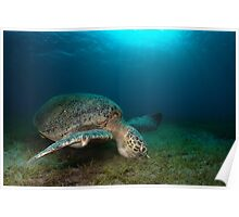 In the sea grass Poster