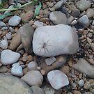 Yo, Spider by marilittlebird