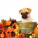 Autumn Puppy - Shelter Art by Renee Dawson