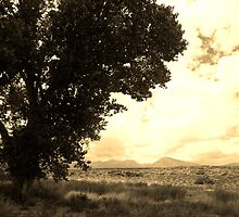 Tree by marilyn diaz