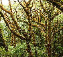 Magical Forest - Pohnpei, Micronesia by Alex Zuccarelli