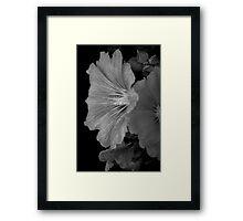 Hollyhock Framed Print