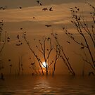 GLORIOUS SUNSET by RakeshSyal
