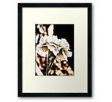 white carnation Framed Print