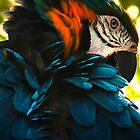 Macaw by RoughCutMatt