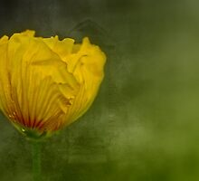 """Birth of a Golden Poppy............."" by Rosehaven"