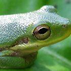 Green Tree Frog by Heavenandus777
