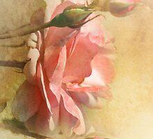 September Rose  by Elaine  Manley