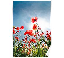 poppies on the sky Poster