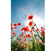 poppies on the sky Photographic Print