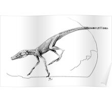 Terrestrisuchus Muscle Study Poster