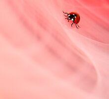 Ladybird - Portrait by George Wheelhouse