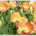Tulips ala Turk by wrathko