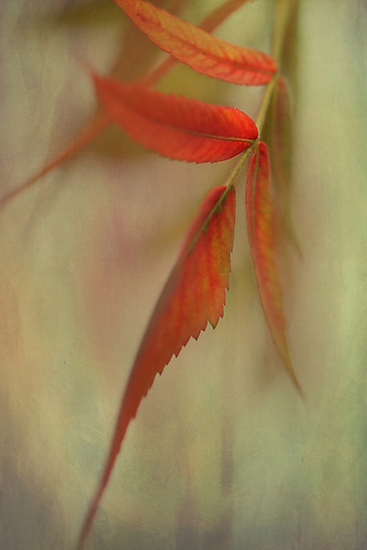 A Touch of Autumn by AnnieSnel