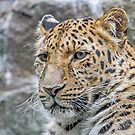 Amur by Mark Hughes