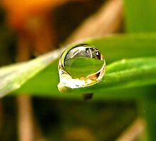 A Drop For YOU Dedicated to My Love, My Husband~ by Brenda Dahl