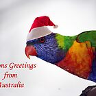 Australian Rainbow Lorikeet Christmas Greeting Card  by Patricia  Knowles