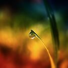 rainbow dew drop by Karin  Taylor