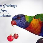 Rainbow Lorikeet Seasons Greetings from Australia  by Patricia  Knowles