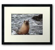 Curio Bay Seal  Framed Print