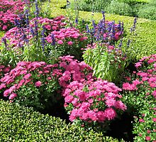 Stunning Pink Flowers in a Little Maze by kathrynsgallery