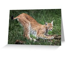 Lynx Greeting Card