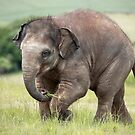 Baby Elephant by Patricia Jacobs CPAGB LRPS BPE3