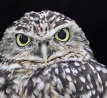 Burrowing Owl - Up Close by Mark Hughes