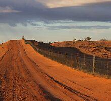 Wild Dog Fence by Ruth Sandow