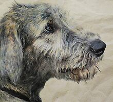Irish Wolfhound Puppy by Laurie Minor