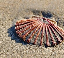 Scallop Shell ~ Lyme Regis by Susie Peek