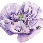 Single Purple Poppy by Esmee van Breugel