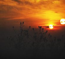 Binary Sunset by Denise Abé