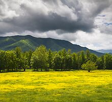 Cades Cove Great Smoky Mountains National Park TN - Fields of Gold by Dave Allen