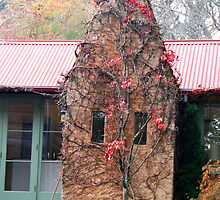 CHIMNEY COTTAGE, MOUNT WILSON by Phil Woodman