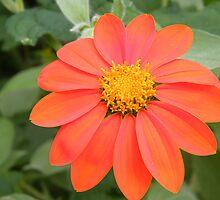 Flower Close-Up, New York Botanical Garden, Bronx, New York   by lenspiro