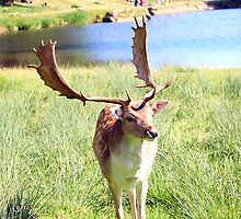 Smiling Fallow by missmoneypenny