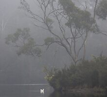 foggy Huon beauty by gaylene