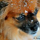 Snow Dog by M.  Photography