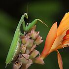 Mantis In The Garden by Gary Fairhead