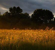 Yellow Streak by Bob Larson