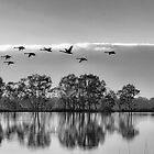 Fly away by Jessy Willemse