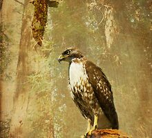 In memory of a hawk by Lynn Starner