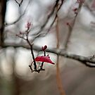 First buds of blossom in Winter by White Owl