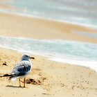 Lonely sea gull by woodnimages