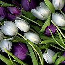 Tulip Medley by Christian Slanec   FineArt Studio