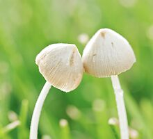 Fungi Romance by April Koehler