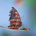 Tattered American Butterfly by Bo Insogna